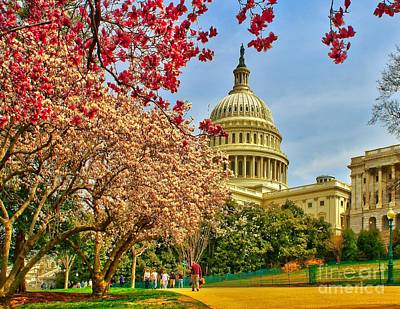 Cherry Blossoms At The Capitol Print by Nick Zelinsky