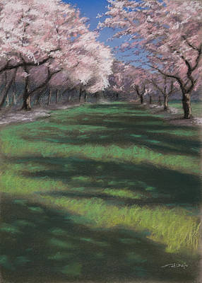 Pastel Painting - Cherry Blossoms by Christopher Reid