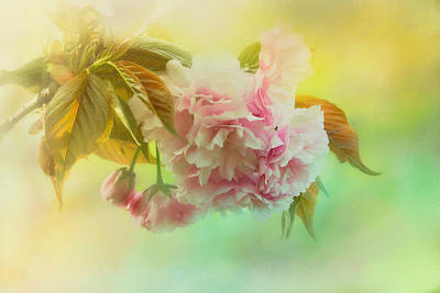 Cherry Blossoms In Spring Print by Jai Johnson