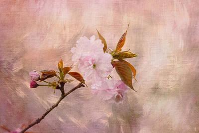 Cherry Blossoms Print by Jai Johnson
