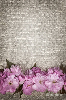Floral Fabric Photograph - Cherry Blossoms On Linen  by Elena Elisseeva