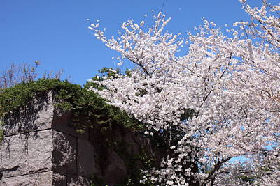 White Photograph - Cherry Blossoms - Washington Dc - 01133 by DC Photographer
