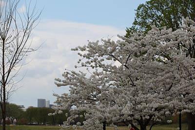 Petals Photograph - Cherry Blossoms - Washington Dc - 011347 by DC Photographer