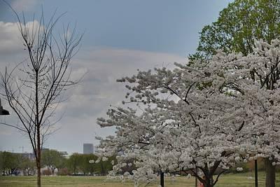 Holidays Photograph - Cherry Blossoms - Washington Dc - 011348 by DC Photographer