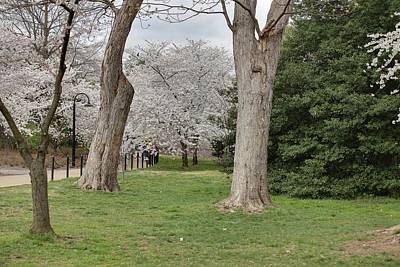 Cherry Blossoms - Washington Dc - 011349 Print by DC Photographer