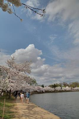 Cherry Blossoms - Washington Dc - 011370 Print by DC Photographer