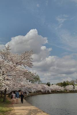 Cherry Blossoms - Washington Dc - 011372 Print by DC Photographer