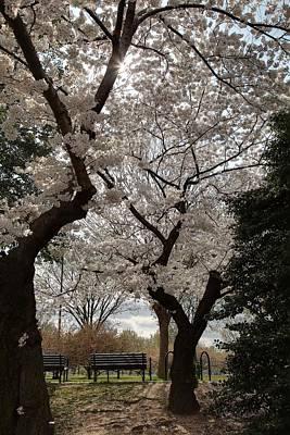 Cherry Blossoms - Washington Dc - 011373 Print by DC Photographer
