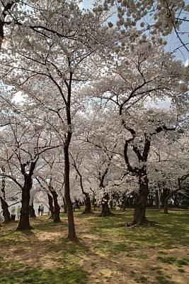 America Photograph - Cherry Blossoms - Washington Dc - 011378 by DC Photographer