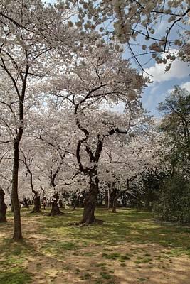 Landscape Photograph - Cherry Blossoms - Washington Dc - 011379 by DC Photographer