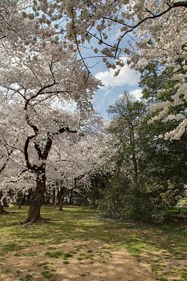 Basin Photograph - Cherry Blossoms - Washington Dc - 011380 by DC Photographer