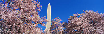 Cherry Blossoms Photograph - Cherry Blossoms Washington Monument by Panoramic Images