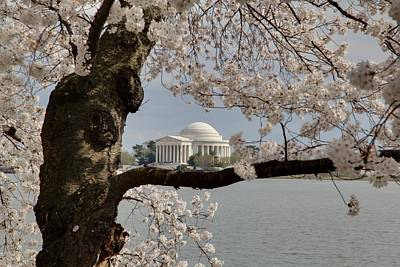 Cherry Blossoms With Jefferson Memorial - Washington Dc - 011322 Print by DC Photographer