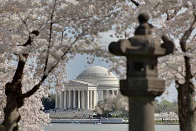 Cherry Blossoms With Jefferson Memorial - Washington Dc - 011325 Print by DC Photographer