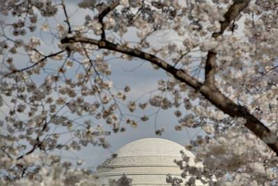 Cherry Blossoms With Jefferson Memorial - Washington Dc - 011331 Print by DC Photographer