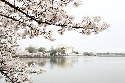 Urban Photograph - Cherry Blossoms With Jefferson Memorial - Washington Dc - 011344 by DC Photographer