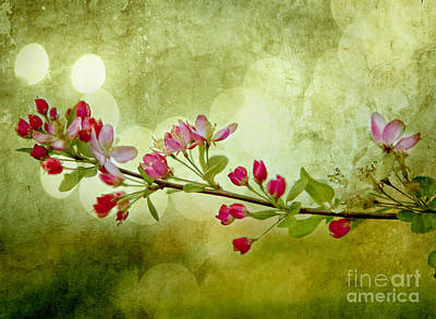 Fruit Tree Art Photograph - Cherry Delight by Linde Townsend