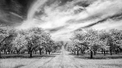 Photograph - Cherry Grove At Seaqust by Stephen Mack