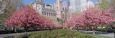 Cherry Blossoms Photograph - Cherry Trees, Battery Park, Nyc, New by Panoramic Images