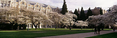 Cherry Trees In The Quad Print by Panoramic Images