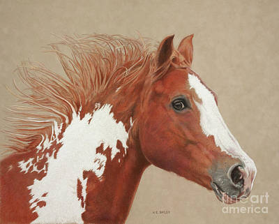 Pinto Drawing - Chesapeake by Helen Bailey