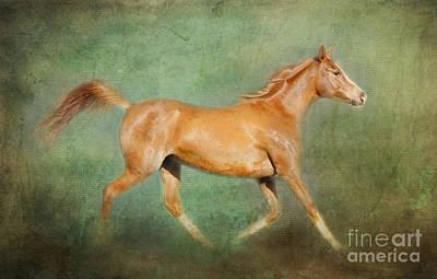 Animals Photograph - Chestnut Arabian Horse Trotting by Michelle Wrighton