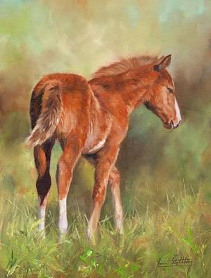 Chestnut Foal Print by David Stribbling