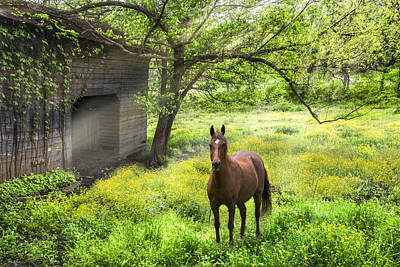 Chestnut Horse In A Sunny Meadow Print by Debra and Dave Vanderlaan