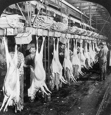 Chicago Meatpacking, C1906 Print by Granger