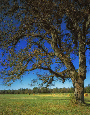 Civil War Battle Site Photograph - Chickamauga Battlefield by Mountain Dreams