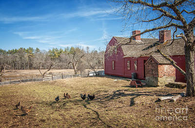 Chickens In The Yard Print by Scott Thorp