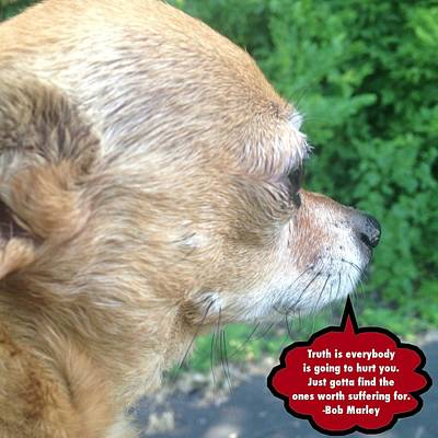 Damian Photograph - Chihuahua Deep Thoughts by Lisa Piper Menkin Stegeman