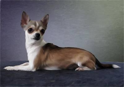Chihuahua Digital Art - Chihuahua by Gun Legler