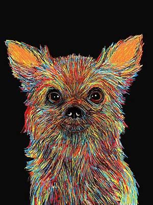 Chihuahua - Rose Print by Bert Hornbeck
