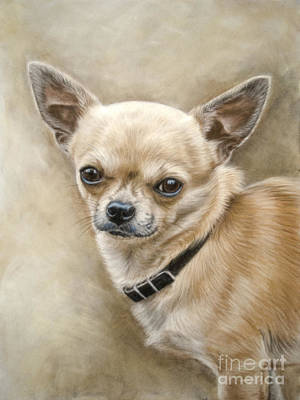 Chihuahua Print by Tobiasz Stefaniak