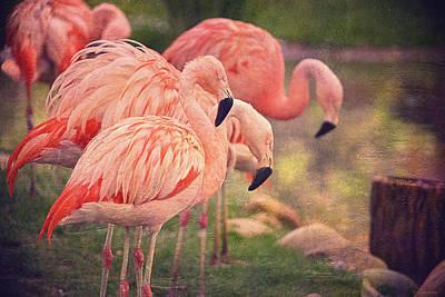 Chilean Flamingos  Print by Maria Angelica Maira