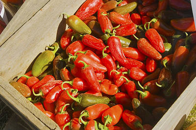Chili Peppers At Maine Farmers Market Photograph Print by Keith Webber Jr