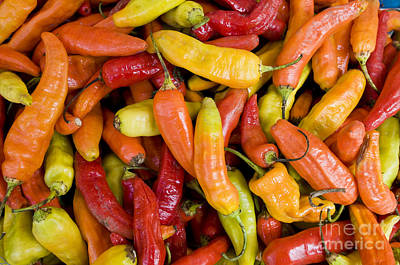 Chili Peppers Print by William H. Mullins