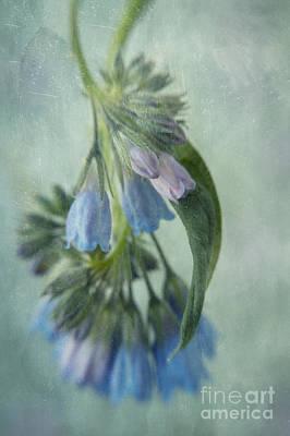Lensbaby Photograph - Chiming Bells Part I by Priska Wettstein
