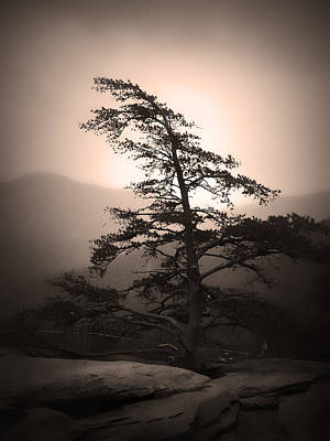 Chimney Rock Lone Tree In Sepia Print by Kelly Hazel