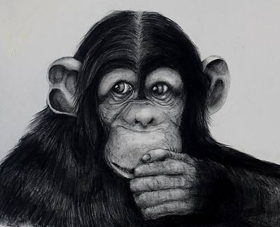 Chimpanzee Drawing - Chimp by Jean Cormier