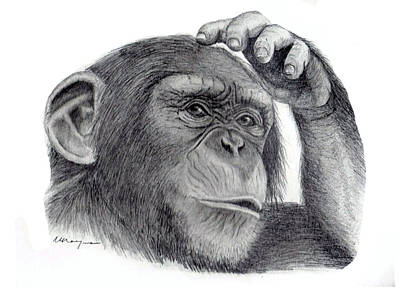 Chimp Print by Mary Mayes