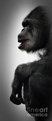 Chimpanzee Profile Vignetee Effect Print by Jim Fitzpatrick