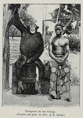 Unusual Animal Photograph - Chimpanzee Sitting With A Young Boy by British Library