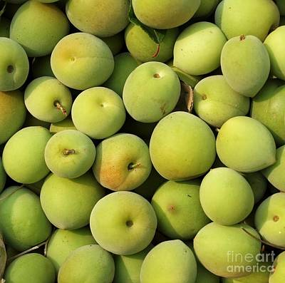 Chinese Green Plums Print by Yali Shi