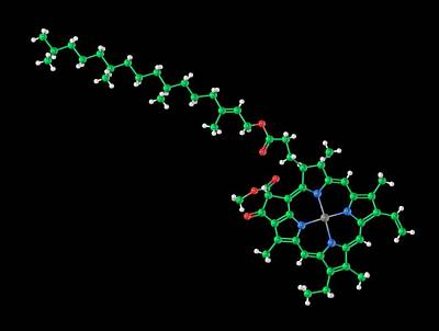 Energy Conversion Photograph - Chlorophyll A Molecule by Carlos Clarivan