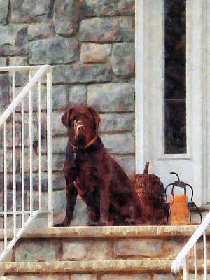 Steps Photograph - Chocolate Labrador On Porch by Susan Savad