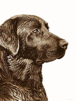 Chocolate Lab Photograph - Chocolate Labrador Retriever by Jennie Marie Schell