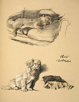 Chow And Pekinese, 1930, Illustrations Print by Cecil Charles Windsor Aldin