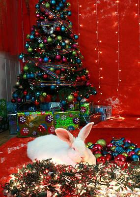 Photograph - Christmas Bunny by Amanda Stadther